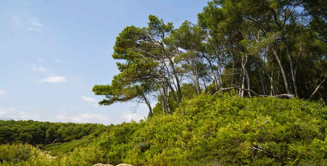 bosque-de-la-marquesa