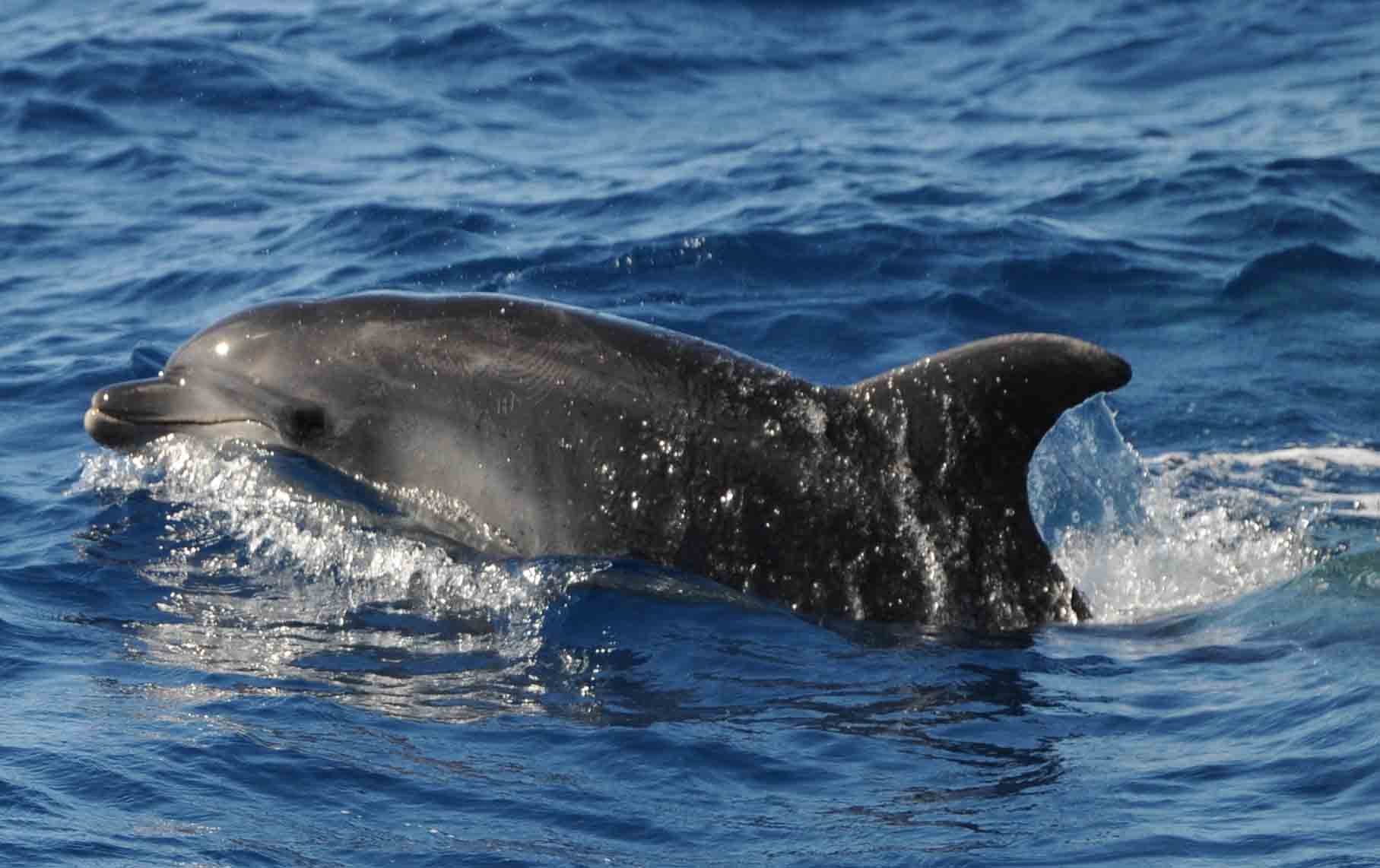 delfines-mulares-acantilados-gigantes