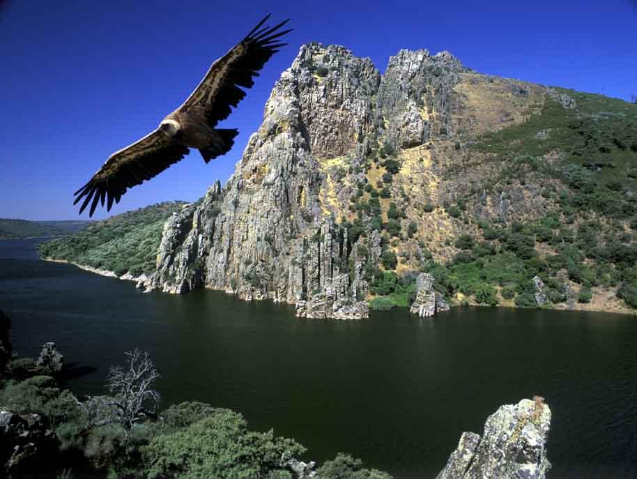 Monfrague-parque-natural-aves