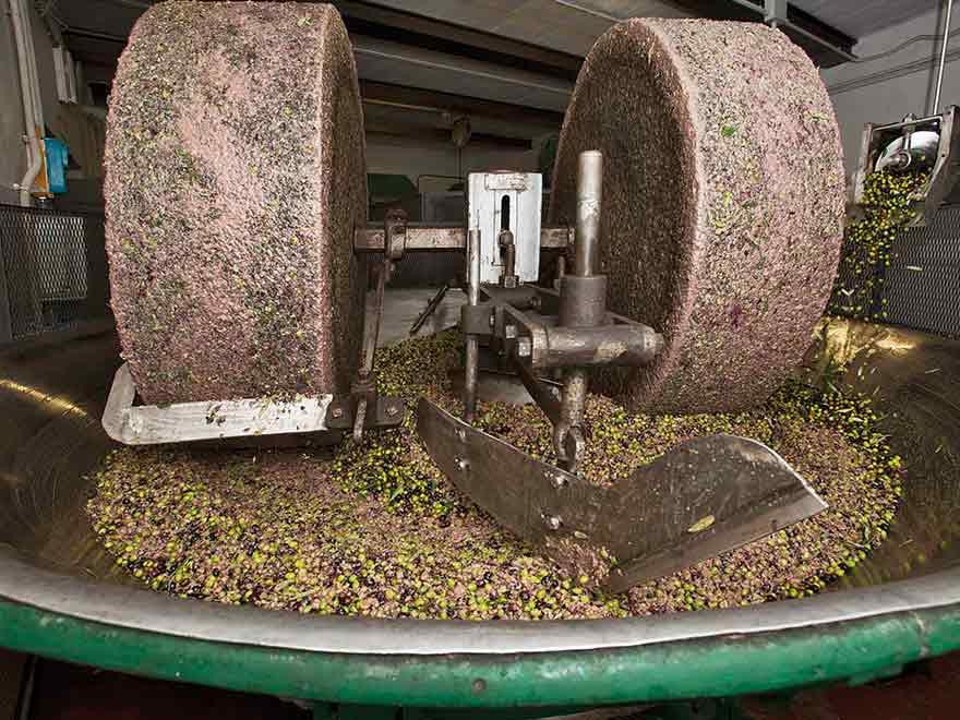 aceite-oliva-molienda
