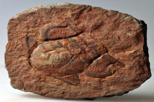 murero-trilobites