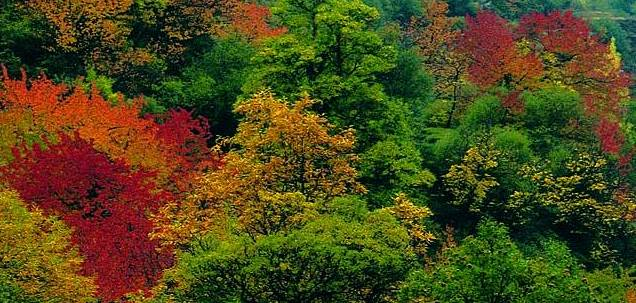 ParquenaturalSierraNevada-coloresotoño