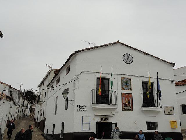 castaño-de-robledo-plaza-del-alamo
