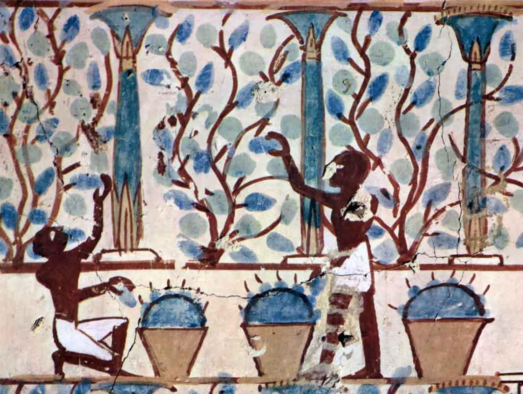 el-vino-español-origen-fenicios