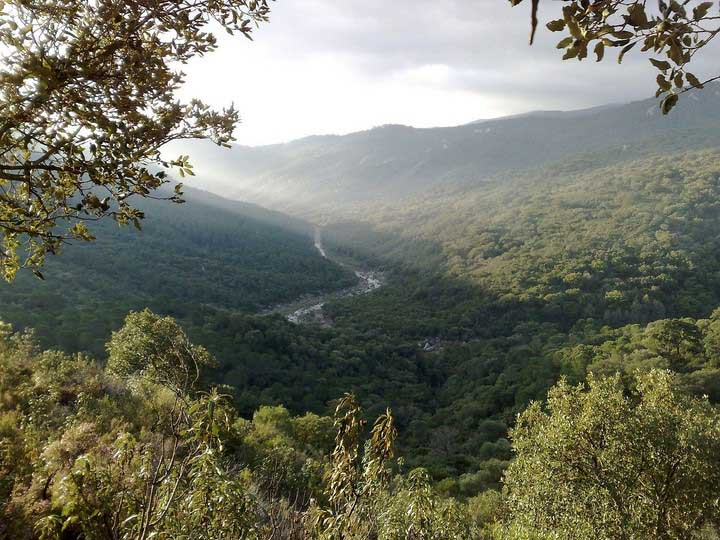 Parque-Natural-de-los-Alcornocales