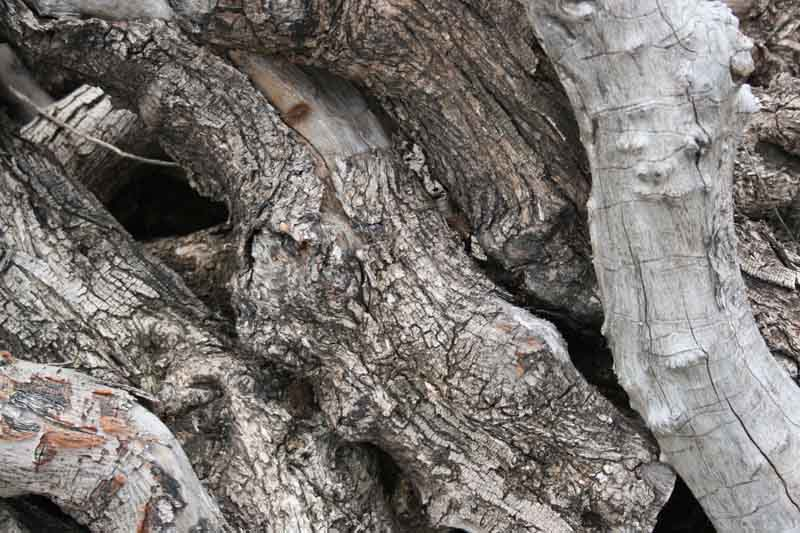 madera-de-olivo-2