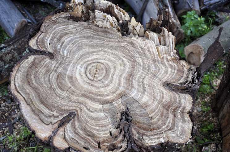 madera-de-olivo-4