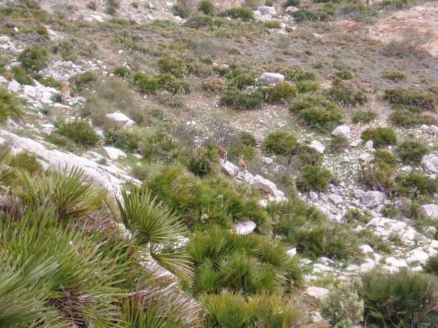 canon-de-los-gaitanes-botanica
