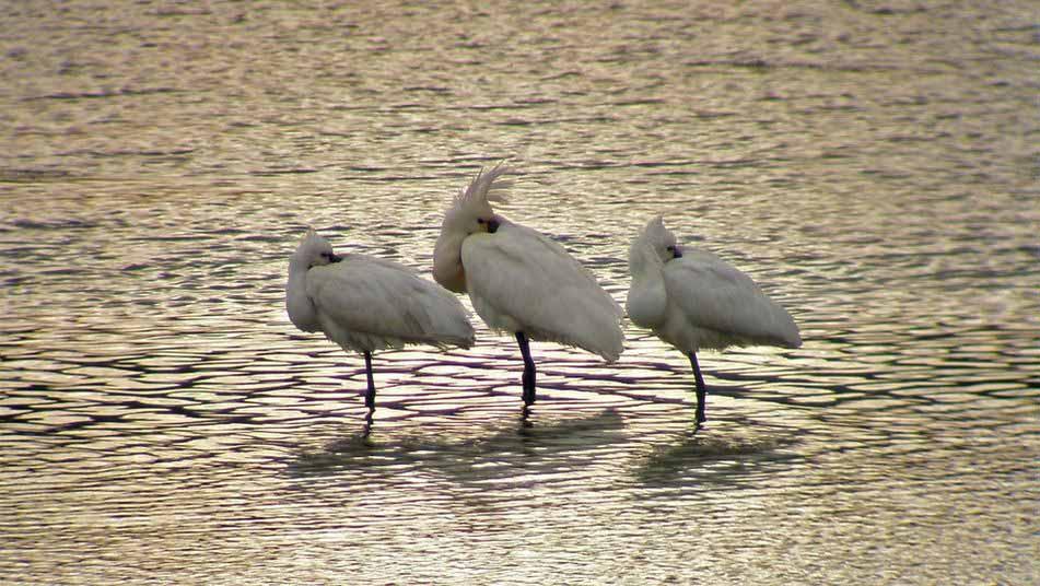 Urdaibai-bird-center-2