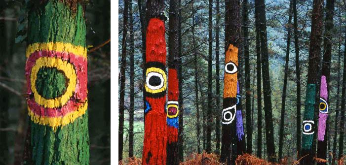 bosque-de-oma-urdaibai-3